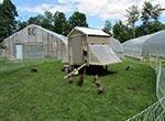 chickentractorthumb(2)