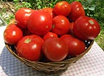tomatoesbasketthumb